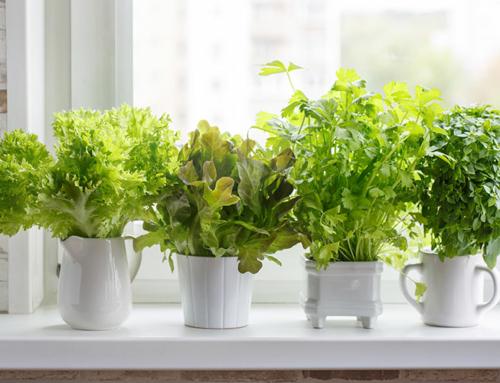Hydroponic – planter i vand