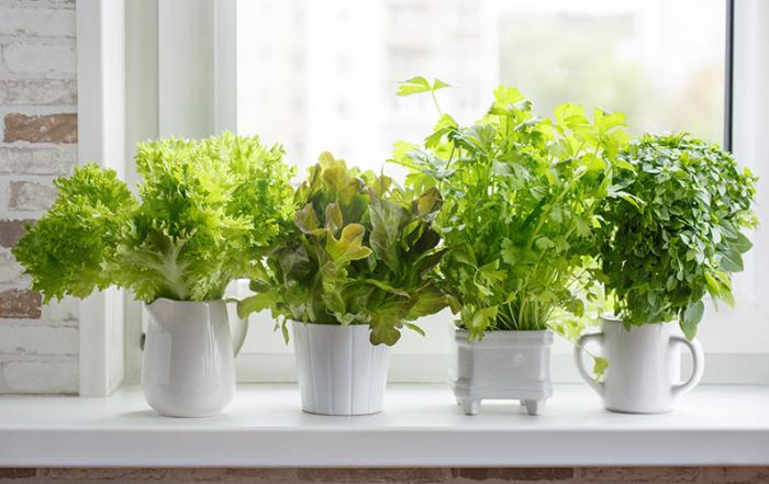 Hydroponic - planter i vand